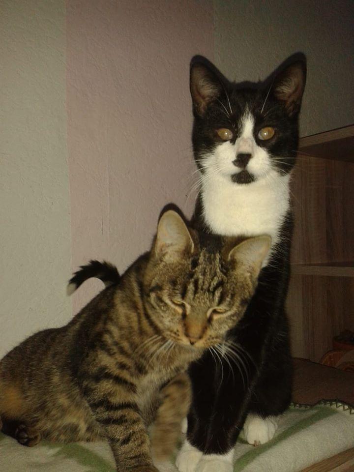 Snorre und Gipsy