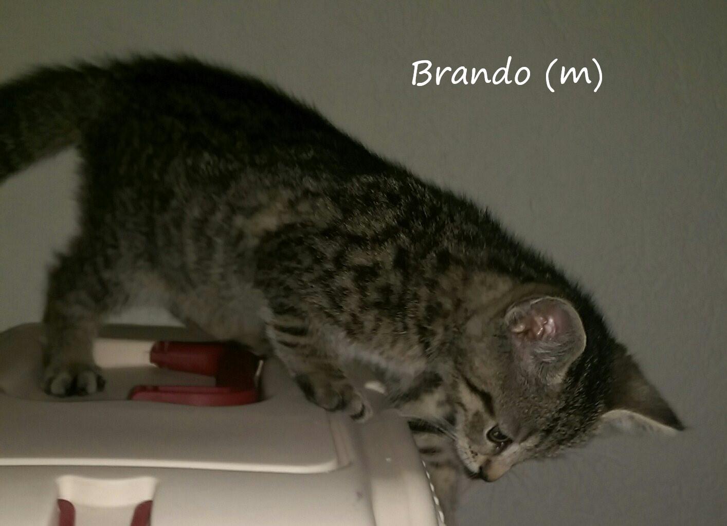 - Brando