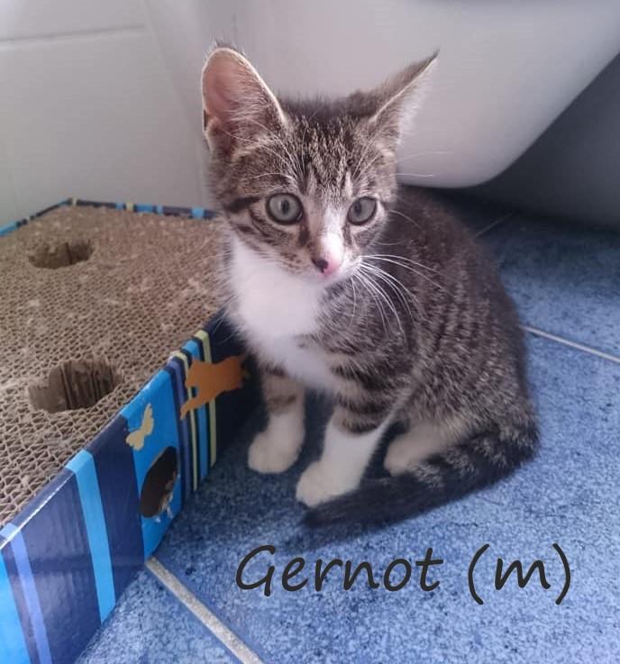 - Gernot
